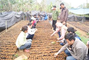 Cán bộ BQL dự án KFW7 hướng dẫn người dân xã Nhân Nghĩa (Lạc Sơn) chăm sóc cây giống đảm bảo thời vụ gieo trồng vào tháng 7 và 8.