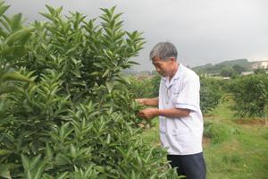 Mặc dù đã ngoài 60 tuổi, ông Phạm Công Định vẫn say sưa làm kinh tế.