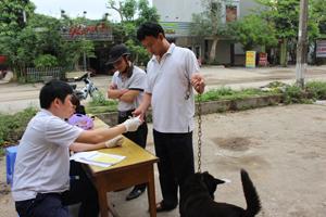 Các chủ nuôi chó trên địa bàn thành phố Hòa Bình đưa chó đến các điểm vắc xin phòng dại và nhận giấy chứng nhận đã tiêm phòng.