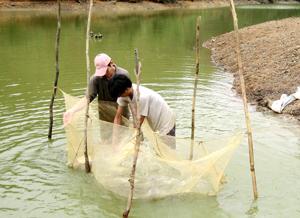 Dự kiến đến năm 2015, sản lượng thủy sản toàn tỉnh đạt trên 7.500 tấn, trong đó, khai thác tự nhiên 1.450 tấn. Ảnh: Người dân khai thác thủy sản tự nhiên trên địa bàn  xã Tân Minh (Đà Bắc). Ảnh: P.V