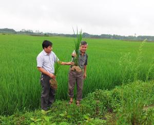 Lãnh đạo Chi cục Bảo vệ thực vật tỉnh kiểm tra lúa trên địa bàn huyện Lương Sơn.