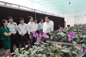Đoàn giám sát tham quan mô hình trồng hoa lan trong nhà lưới tại Trung tâm ứng dụng và chuyển giao tiến bộ khoa học công nghệ (Sở KH-CN).
