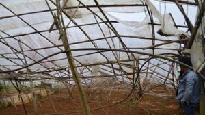 Lốc xoáy kèm mưa đá gây thiệt hại nhiều nhà kính trồng rau, hoa tại Đà Lạt.