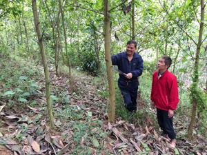 Ông Bùi Văn Òn (bên trái) trao đổi kinh nghiệm trồng keo  với người dân trong xã.