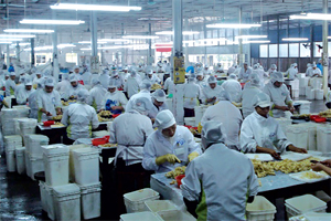Công ty TNHH Pacific đảm bảo tốt các điều kiện vệ sinh an toàn thực phẩm khi chế biến nông sản xuất khẩu.