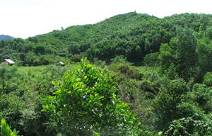 Hiện nay, huyện Lạc Thủy là một trong những địa bàn duy trì tốt độ che phủ rừng trên địa bàn với tỷ lệ đạt gần 52%.