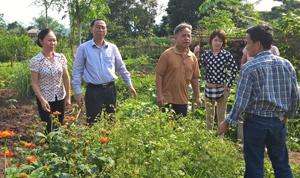 Đoàn công tác đến thăm mô hình trồng rau theo phương pháp nông nghiệp hữu cơ tại xã Cư Yên (Lương Sơn).