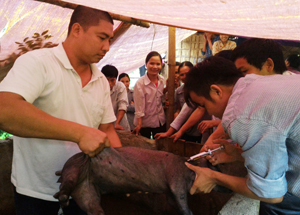 Cán bộ Trung tâm hỗ trợ vùng dân tộc phối hợp với đơn vị chức năng hướng dẫn nông dân kỹ thuật chăn nuôi, phát triển sản xuất hiệu quả ở xã Miền Đồi (Lạc Sơn).