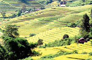 Đến Lai Châu, du khách sẽ được ngắm ruộng bậc thang trải dài trên các sườn đồi.