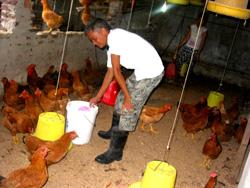 Nhà nông Nguyễn Trọng Chương tích cực ứng dụng tiến bộ KHKT vào chăn nuôi.