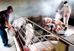 Phun thuốc khử trùng, tiêu độc khu vực chăn nuôi tại các hộ ở xã Đại Đồng, huyện Văn Lâm, tỉnh Hưng Yên.