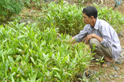 Nông dân huyện Đà Bắc ươm keo giống phục vụ kế hoạch trồng rừng năm 2010