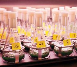 Những vi sinh vật được trang bị thêm gen nhằm tăng khả năng sinh sản