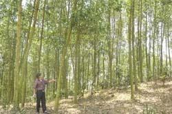Xã Đông Lai (Tân Lạc) phát triển kinh tế rừng cho thu nhập trên 50 triệu đông/ha