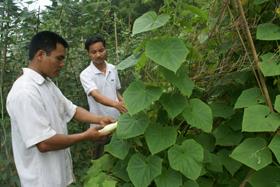 Anh Xa Kỳ Đông, xóm Tình, xã Tu Lý ứng dụng tiến bộ KH-KT vào sản xuất nông nghiệp.