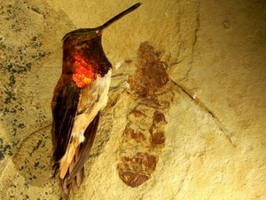 Hóa thạch kiến khổng lồ có kích thước bằng một chú chim nhỏ.
