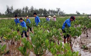 Trồng rừng ngập mặn tại Hậu Lộc (Thanh hóa).