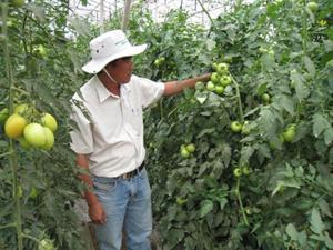 Cán bộ Sở Khoa học và Công nghệ Lâm Đồng tham quan mô hình sản xuất nông nghiệp ở huyện Đức Trọng.