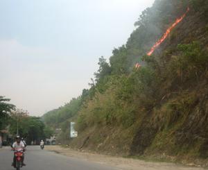 Đám cháy đồi keo bùng phát tại khu vực km 70 + 500 - quốc lộ 6, đoạn qua địa bàn tổ 26, phường Đồng Tiến, thành phố Hoà Bình.