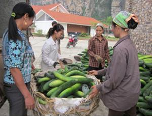 Kiên trì thực hiện Nghị quyết 11/NQ-CP, SXNN của huyện Tân Lạc phát triển ổn định, góp phần nâng cao đời sống nhân dân. Trong ảnh: Mô hình trồng bí xanh cho thu nhập cao tại khu 2, thị trấn Mường Khến.