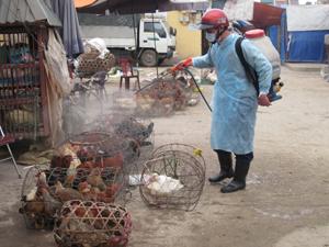 Mỗi tuần/lần, thành phố Hòa Bình tiến hành phun khử tiêu độc tại điểm buôn bán gia cầm các chợ.