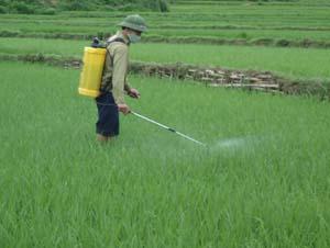 Nông dân xã Tu Lý (Đà Bắc) tập trung phun thuốc phòng trừ rầy lứa 3 hại lúa chiêm - xuân.