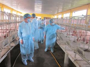 Đoàn công tác Cục Thú y, Sở NN&PTNT kiểm tra ổ dịch lợn tai xanh tại trại giống của Trung tâm Giống vật nuôi – Thủy Sản (TPHB).