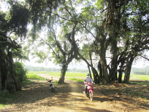 Cây si cổ có tuổi hơn 800 năm ở xóm Suối Cốc, xã Hợp Hoà, huyện Lương Sơn.