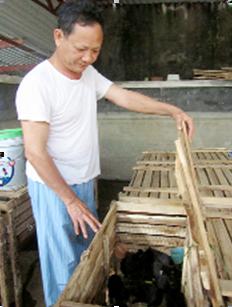 Ông Hùng bên những chuồng trại nuôi chồn Nam Mỹ mang lại hiệu quả kinh tế cao.