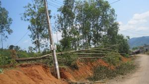 Nhiều cây lâm nghiệp ở xóm Ngay xã Mỹ Hòa (Tân Lạc) bị mưa lốc làm gãy đổ.