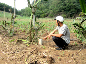 Mốc giới giữa xã Độc Lập và Sủ Ngòi trên vườn gia đình anh Lê Văn Lạc đang canh tác tại khu vực Bưa Bún mới được UBND xã Sủ Ngòi cắm lại tháng 2/2013.