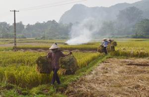 Nông dân xã Cư Yên (Lương Sơn) đốt rơm rạ ngay tại ruộng sau khi thu hoạch – đây là cách xử lý không những gây ô nhiễm không khí mà còn làm mất đi phần lớn lượng dinh dưỡng trong rơm, rạ.