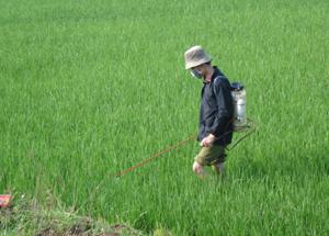 Phun thuốc diệt trừ rầy cho diện tích lúa xuân trà muộn đang giai đoạn phân hóa đòng – ôm đòng trên địa bàn huyện Lạc Sơn.