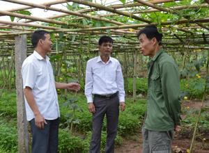 Lãnh đạo Đảng ủy xã Trung Minh nắm bắt tình hình chuyển đổi cơ cấu cây trồng của gia đình đảng viên Nguyễn Kim Toàn ở xóm Trung.
