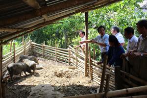 Đoàn công tác Viện Chăn nuôi và các chuyên gia Nhật Bản khảo sát thực tế tại một số hộ chăn nuôi lợn bản địa xóm Giằng 2, xã Cao Sơn (Đà Bắc)