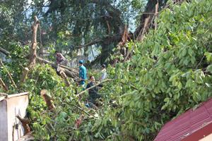 Lực lượng phòng - chống lụt bão tại chỗ phường Chăm Mát – thành phố Hòa Bình được huy động xử lý hiện trường cây đa đổ vào nhà xưởng cơ sở sản xuất và nhà dân.