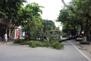 Cây xanh bất ngờ đổ xuống đường gây mất an toàn và và cản trở giao thông trên trục đường Cù Chính Lan.