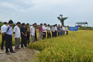 Các đại biểu khảo sát thực tế tại ruộng sản xuất lúa giống MĐ1 của Trại sản xuất giống cây trồng Lạc Sơn