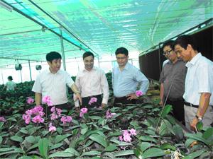 Đồng chí Nguyễn Văn Dũng, Phó Chủ tịch UBND tỉnh kiểm tra mô hình sản xuất lan Hồ Điệp tại Trung tâm Ứng dụng tiến bộ KH&CN.