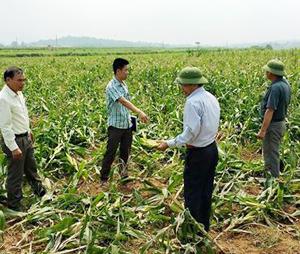 Ban chỉ huy PCLB & TKCN tỉnh kiểm tra, chỉ đạo khắc phục hậu quả giông, lốc tại xã Liên Vũ (Lạc Sơn).