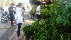 Nhiều cơ sở bán cây giống ở huyện Cao Phong mọc ra nhưng chưa kiểm định được chất lượng cây trồng.