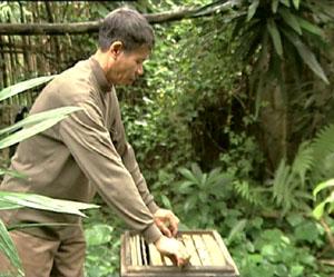 Ông Trần Quốc Tuấn chăm sóc đàn ong.