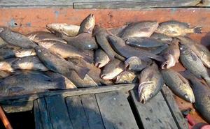 Bộ Nông nghiệp yêu cầu người dân không ăn cá chết. Ảnh: Đức Hùng.