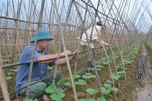 Thực hiện Nghị quyết về chuyển đổi cơ cấu cây trồng trong sản xuất nông nghiệp của Huyện uỷ, người dân xóm Mớ Đá, xã Hạ Bì (Kim Bôi) chuyển diện tích đất trồng lúa không hiệu quả sang trồng các loại cây màu có giá trị cao.