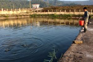 Sở NN&PTNT khuyến cáo, vào mùa mưa bão các cơ sở nuôi trồng thủy sản cần chủ động triển khai các biện pháp kỹ thuật, quản lý các loại thủy sản.