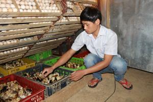 4 máy ấp trứng và 3 lò nở, mỗi ngày, cơ sở Hoàng Huế do anh Bùi Văn Huế làm chủ cho ra lò từ 1.500 - 2.000 con gà giống cung cấp cho   người dân các xã trong và ngoài huyện Tân Lạc.