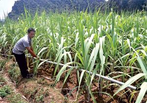 Được tuyên truyền nâng cao ý thức về phòng - chống hạn, nông dân xã Ngọc Lương (Yên Thủy) chủ động đầu tư hệ thống dẫn nước để đảm bảo nước tưới cho diện tích trồng mía tím.