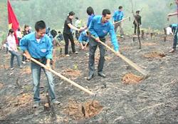 ĐVTN huyện Tân Lạc ra quân trồng cây xanh bảo vệ môi trường