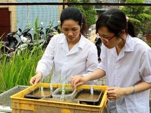 Cán bộ Viện Di truyền chăm sóc, nghiên cứu giống lúa được tìm thấy tại khu Thành Dền.