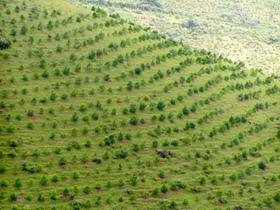 Việt Nam là một trong vài quốc gia có kinh nghiệm trong việc thực hiện các chương trình trồng rừng.